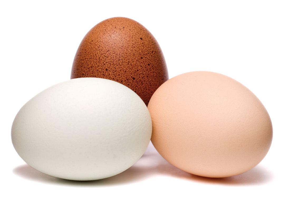 egg allergi