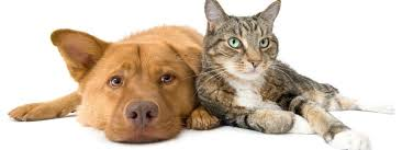 hunde allergi