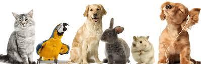 dyr allergi test